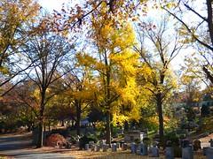 P1060742 (amiterangi1) Tags: woodlawncemetery autumn cemetery woodlawn