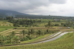 Jatiluwih, Bali (Baptiste L) Tags: jatiluwih bali indonesia