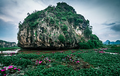 Hồ Súng (=Heo Ngốc=) Tags: fl flower lily lake green mountain rock clouds landscape water stone vietnam maiantiem hoasúng beautiful nobody