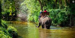 Elephants Trekking in Thailand (Travel Center UK) Tags: trekking jungle khaosokriver phuket thailand wildlife elephants elephantstrekking junglesafari adventure jungletrek landscapes photooftheday travel naturephotography nature