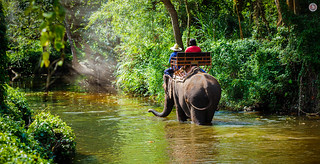 Elephants Trekking in Thailand