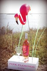 PinK Flamingo - Camargue (duketteman) Tags: listel pinkflamingo flamant rose camargue rosé étang michelbouvet flamantbouvet cuvée9° snomingo donfeatherstone