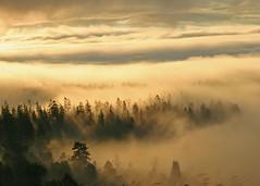 headed back to Jackson Hole (hennessy.barb) Tags: yellowstonenationalpark yellowstone landscape clouds morninglight ynp jacksonhole wilderness nature morning magic magical barbhennessy