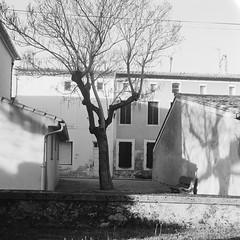 End of the day (davidgarciadorado) Tags: hautegaronne spring trees shadows village afternnon trix rolleiflex zeiss planar 6x6 mediumformat blackandwhite