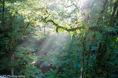 Ottoways (JPS-Photography) Tags: australia nikon sun trees forest mist rays