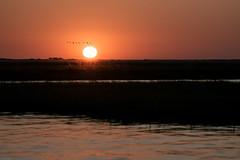 Africans sunset (knipslog.de) Tags: sunset chobe river botswana botsuana safari adventure wildlife wild animals selfdrivesafari