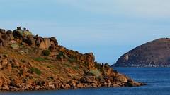 Granite Island (Ross Major) Tags: granite island victor harbour south australia olympus rocky coast sea ocean water