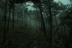 FogForest (SecureTheMoment) Tags: trail mystic wald mystisch mist fog forest landscape darknes landschaft nebel dunst