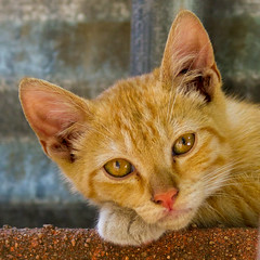 Stray kitten (suzeesusie) Tags: cat cats animal animals kitten kittens cute feral young stray baby face eyes closeup kitty furry