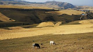 新疆江布拉克草原   Braque Prairie, Xinjiang