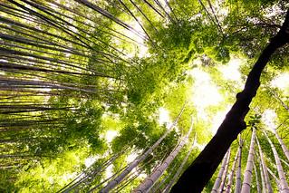 Tourist trap @ Arashiyama bamboo forest