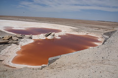 DE5_2032 (takkotakko) Tags: san ignacio lagoon laguna red mineral water bacteria color baja california mexico sur norte summer travel people mexican mexicano