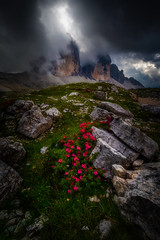 The Dolomites (Croosterpix) Tags: landscape nature mountains flowers dolomiti dolomites light clouds rocks sony a7r nikkor1835