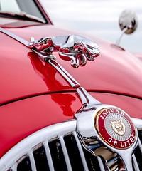I have never seen a Jaguar so beautiful.   #jaguar #red #classiccars #vintagecars #sunday #cars #vintage #classic #classiccarsdaily (partsavatar) Tags: jaguar red classiccars vintagecars sunday cars vintage classic classiccarsdaily