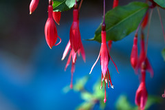 .... (dmnq_fenot) Tags: 7dwf flora closeup