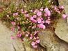 07.06.2017 - Batz, jardin Georges-Delaselle (35) (maryvalem) Tags: france bretagne finistère îledebatz alem lemétayer alainlemétayer