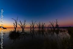 IMG_5473 (biglaptogs) Tags: barmera lakebonney riverland sa states sunsetsunrise