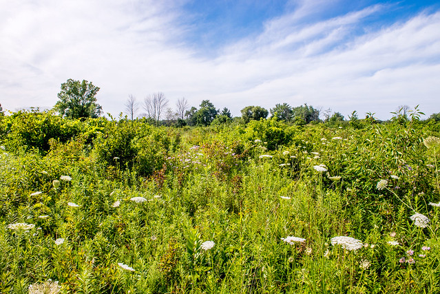 Cressmoor Nature Preserve - July 25, 2017