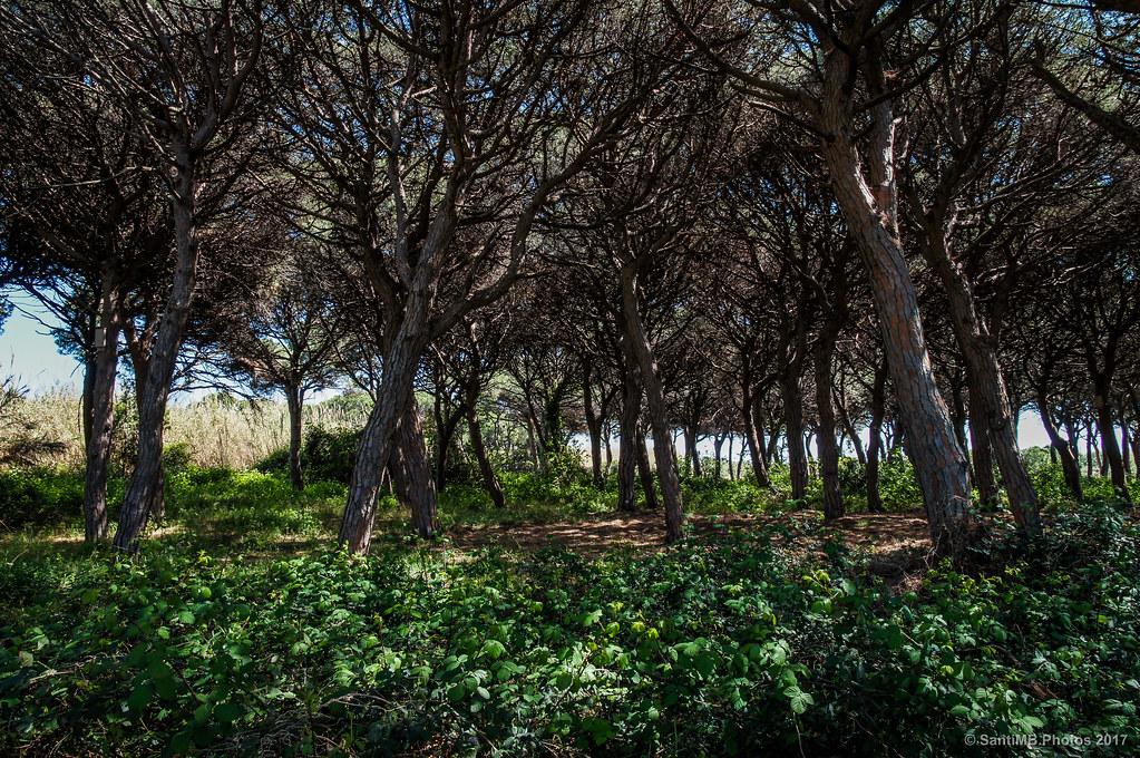 El bosque de los murciélagos
