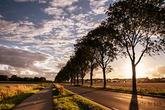 Empty road (marielledevalk) Tags: europe dutch holland sunset sun evening empty road shadow tree landscape horizon clouds sky silhouet