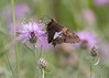 Nature walk in Windham Path (DavezPicts) Tags: nature park inspect butterfly windham ny