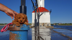 First Big Trip (tquist24) Tags: cavapoo lakemichigan michigan samsung samsunggalaxys6 stjoseph stjosephlighthouse dog geotagged hand lighthouse pier puppy reflection reflections sky summer water saintjoseph unitedstates
