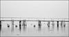 Seascape (Eline Lyng) Tags: monochrom bw blackandwhite outdoor landscape nature seascape shoreline norway larkollen sea water x1d hasselblad hasselbladx1d 90mm pir longexposure fujivelvia fuji