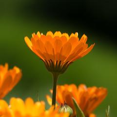 Flower - UBC Botanical Gardens - 01