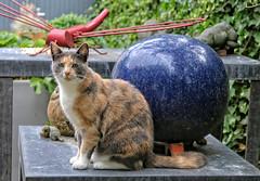 Loesje (Steenvoorde Leen - 4 ml views) Tags: doorn 2017 utrechtseheuvelrug pussy puss cat kat poes jong young katze chat minou mieze pussycat gata gato gatta loesje look kijk