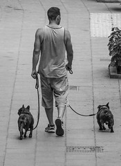 Dog walker. (CWhatPhotos) Tags: puerto del la cruz tenerife going holiday holidays photographs photograph pics pictures pic picture image images foto fotos photography artistic that have which with contain olympus esystem four thirds digital camera lens 43 mft micro cwhatphotos dog dogs walk walker two together mans best friend friends animal animals pet canine man male walks littledoglaughedstories