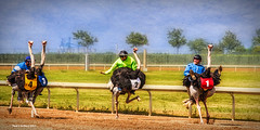 Race De-Plume! (jackalope22) Tags: ostrich races fun ostriches color prairie meadows