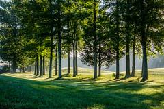 morning light (lvphotos!) Tags: trees light sunlight sunray morning beautiful line contrast green shade sunny bright