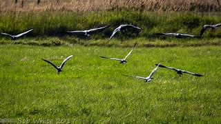 Fleeing flock