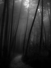 Le chemin (david49100) Tags: 2016 maineetloire seichessurleloir arbres chemin d5100 décembre nikon nikond5100 path trees