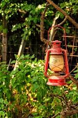 Lantern (Swifetmom2016) Tags: lantern red color light lamp wick kerosene candle green vintage retro old wood hanging leaf tree nature noperson garden outdoors vine flora