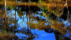 SHIMMERING REFLECTIONS (Lani Elliott) Tags: nature naturephotography lanielliott scene view water creek trees reflections reflection color colour colourful bright light shimmering scenictasmania australia tasmania blue green