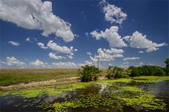 Delta del Danubio (morri.antonio) Tags: delta riflessi