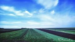 Fields (aminakasumova) Tags: landschaft landscape landscapes fields field gold sky beautifulsky sunny day oil пейзаж день красиво рапс поле небо