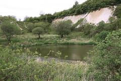 Kalkbruch, Feuchtbiotop (julia_HalleFotoFan) Tags: rügen jasmund kreidemuseum gummanz kreidemuseumrügen feuchtbiotop kreidebruch