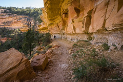 Cliff Springs Trail (NettyA) Tags: 2017 arizona grandcanyon grandcanyonnationalpark northrim sonya7r usa hiking travel cliffsprings trail hike overhang cliff sandstone geology rock track hiker