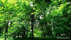 Park in Chernivtsi,Ukraine (aminakasumova) Tags: chernivtsi chernovitz park forest trees tree green grass парк жовтневий черновцы украина лес тайга пейзаж центральный центральныйпарк centralpark central ukraine деревья дерево зелень травв трава гуща aminakas