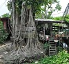 nonthaburi - koh kret - thailande 8 (La-Thailande-et-l-Asie) Tags: île rivière kohkret thailande nonthaburi