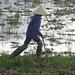 Buffalo farmer at Phong Nha