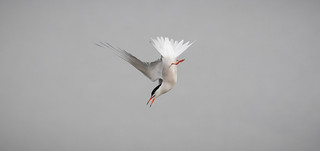 A Tern in the Right Direction?