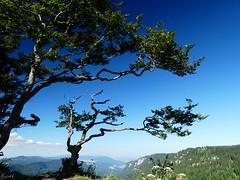 Am Abhang (fools4tress) Tags: baum tree creuxduvan lesoliat