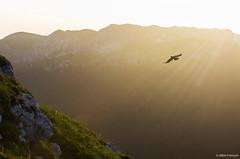 La belle et le chocard (larbinos) Tags: montagne montain nature landscape paysage chartreuse isère grenoble igersgrenoble albin larbinos pentax k5 chocard oiseau 2017 juillet randonnée sunset