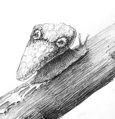 Harmless (Marcos Telias) Tags: drawing sketch dibujo caracol slug snail illustration ilustración boceto bosquejo arte artista artist ballpoint bolígrafo pen lápiz fantasy