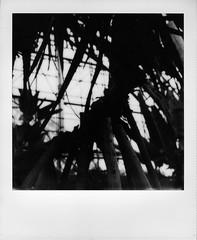 (Akira F.) Tags: instant polaroid impossibleproject sx70 blackandwhite bw bwsx70 monochrome filmphotography film