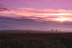 On my way to Hull an early morning (JerryGoulet) Tags: fog nature nikon wilderness atmosphere field uk hull expression red pink light england nikonflickraward sunrise clouds skies space wheat earlymorning sunset empty angle d500 sky flickrelite