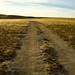 170720-road-dirt-antelope-island.jpg